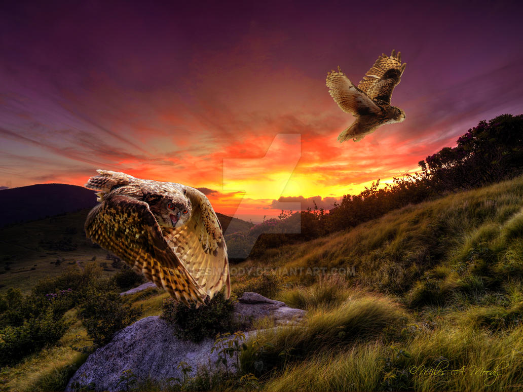 Raptors Ascending at Jane's Bald by milesmoody