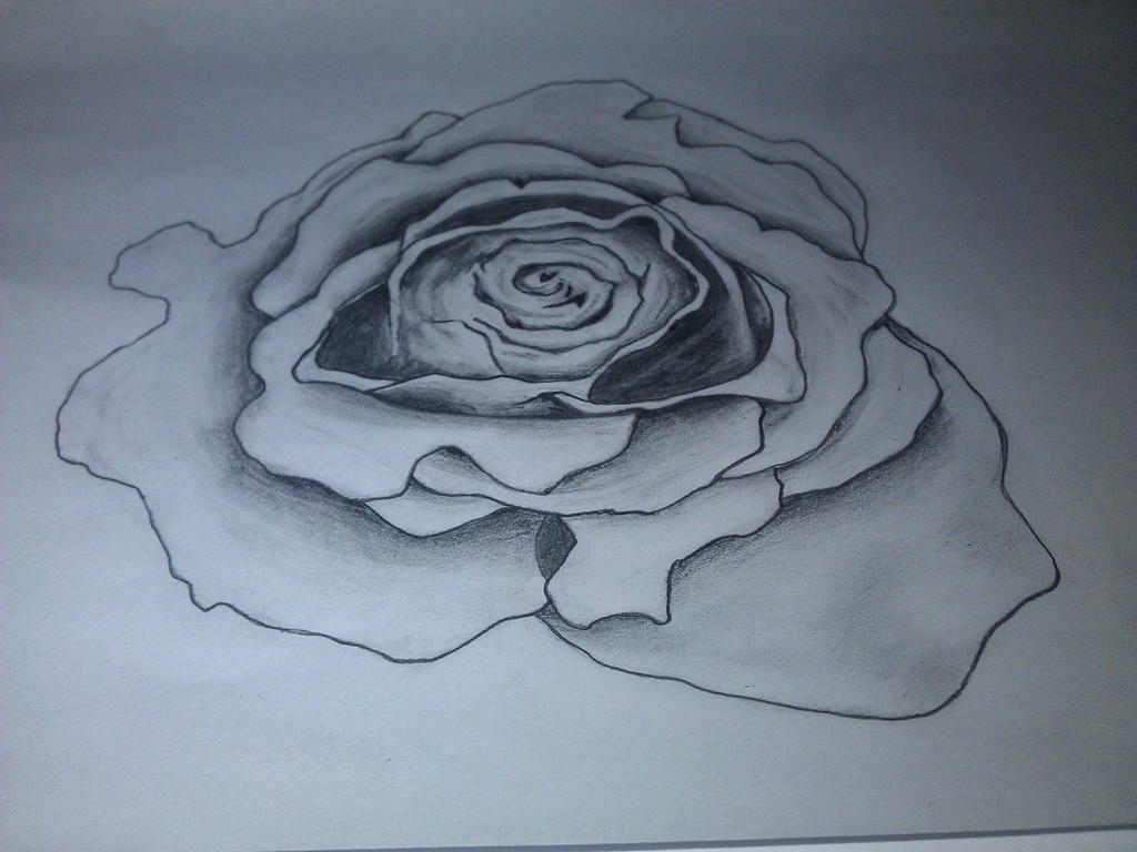 Simple Line Art Rose : Just a simple rose by stoffen on deviantart