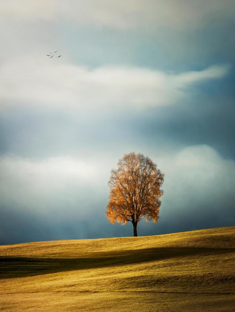 Autumn tree by streamweb