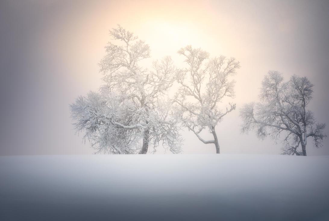 Winter simplicity by streamweb
