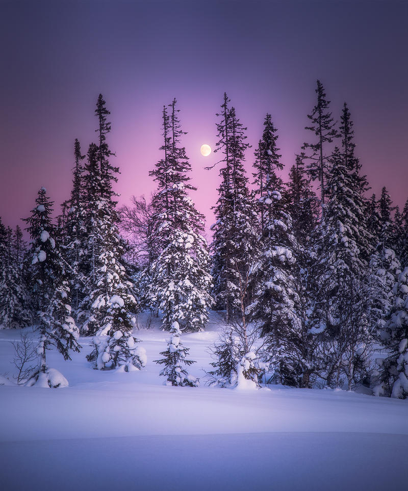 Winter Stillness by streamweb