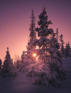Warming light by streamweb