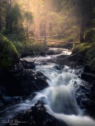 Forest mood by streamweb
