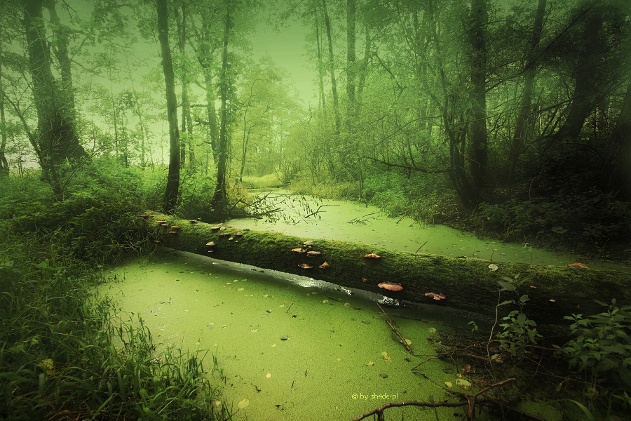 swamp of sorrow by shade-pl