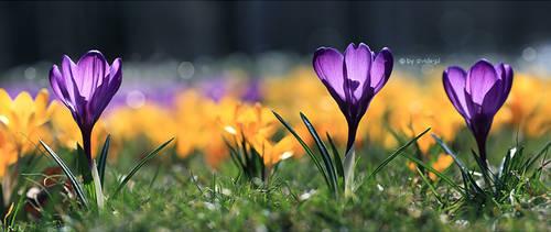 Spring, sprang, sprung by shade-pl