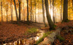 Autumn forest by shade-pl