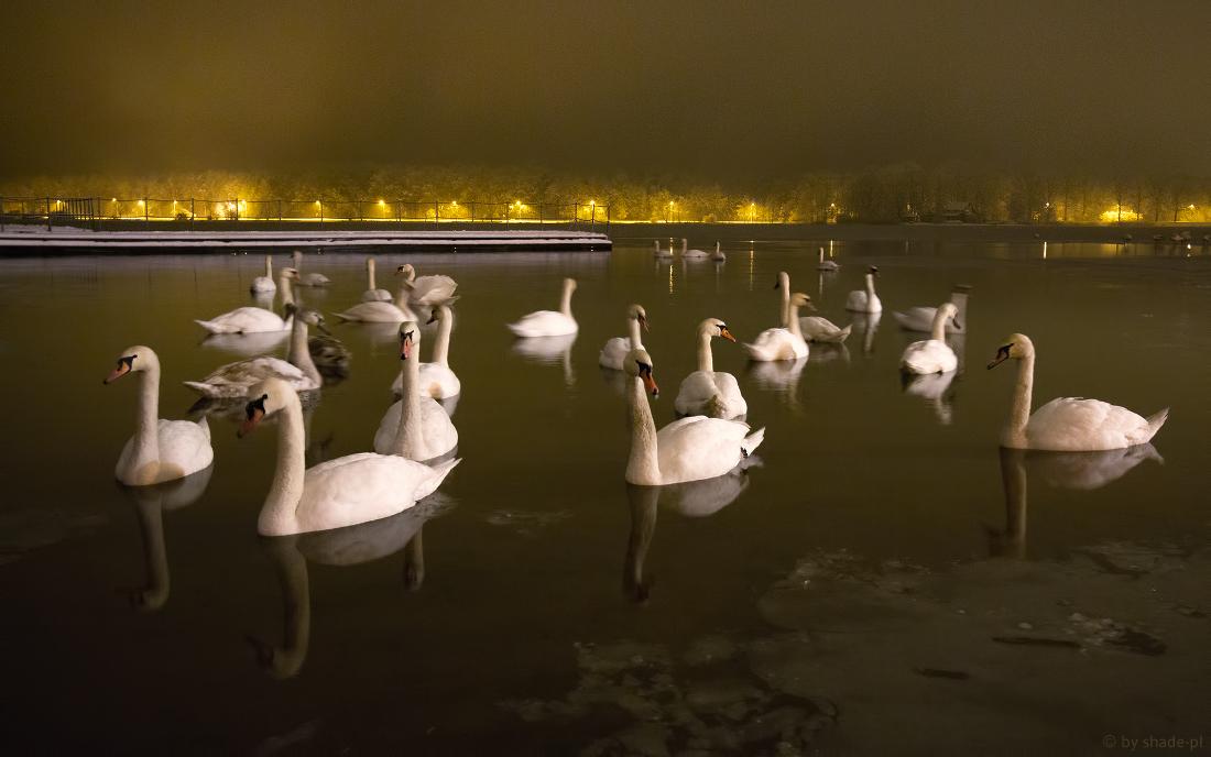 Swan lake by shade-pl