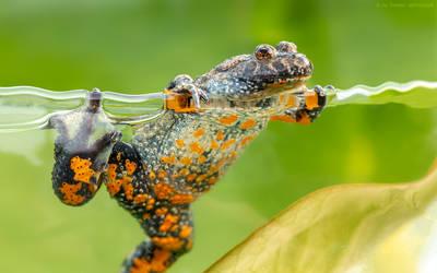 Reptiles and Amphibians on naturephotographer - DeviantArt