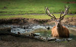 Relaxing mud-bath