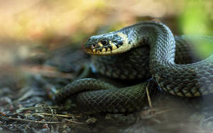 Grass Snake II