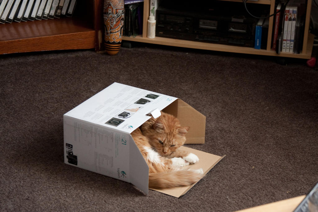 Boxed by sith-kitten
