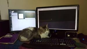 Cat On Keyboard