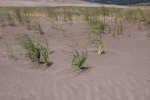 Grass Circles by kittenwylde