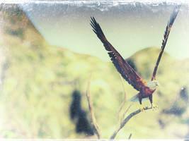 Eagle by kittenwylde