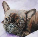 Lua - The Brindle French Bulldog