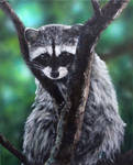 Fluffius Maximus - The Raccoon