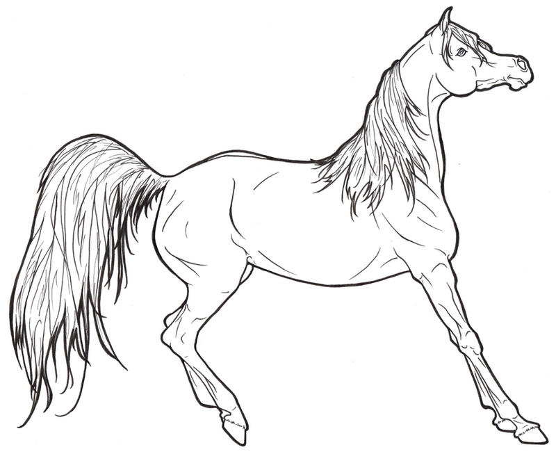 Realistic arabian horse coloring pages pictures
