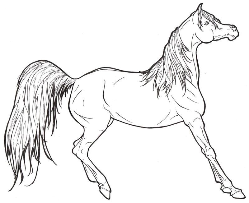 Arabian Horse Lineart by ReQuay on DeviantArt