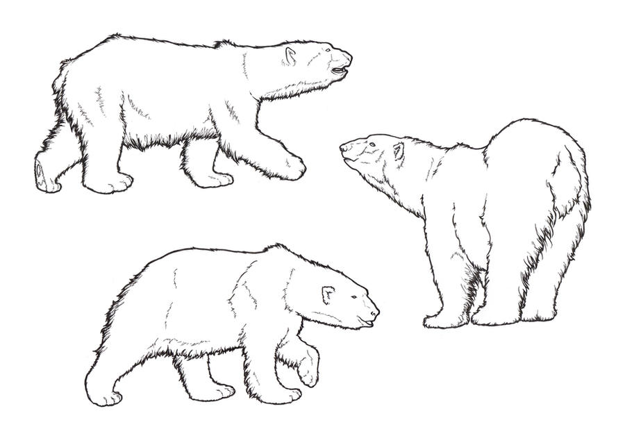 Line Art Bear : Polar bear lines by requay on deviantart