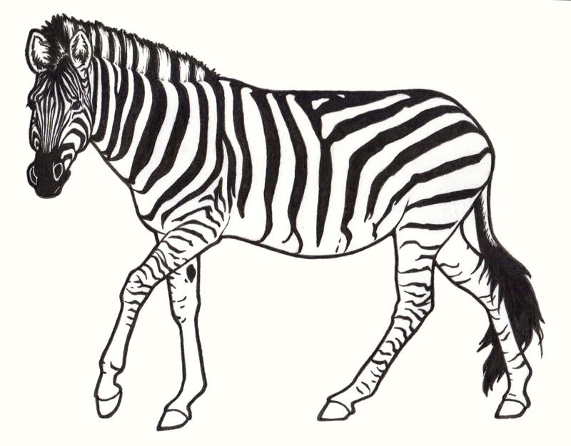 Line Drawing Zebra : Zebra by requay on deviantart