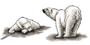 Polar Bear Companions