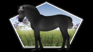Zeraa Foal Design