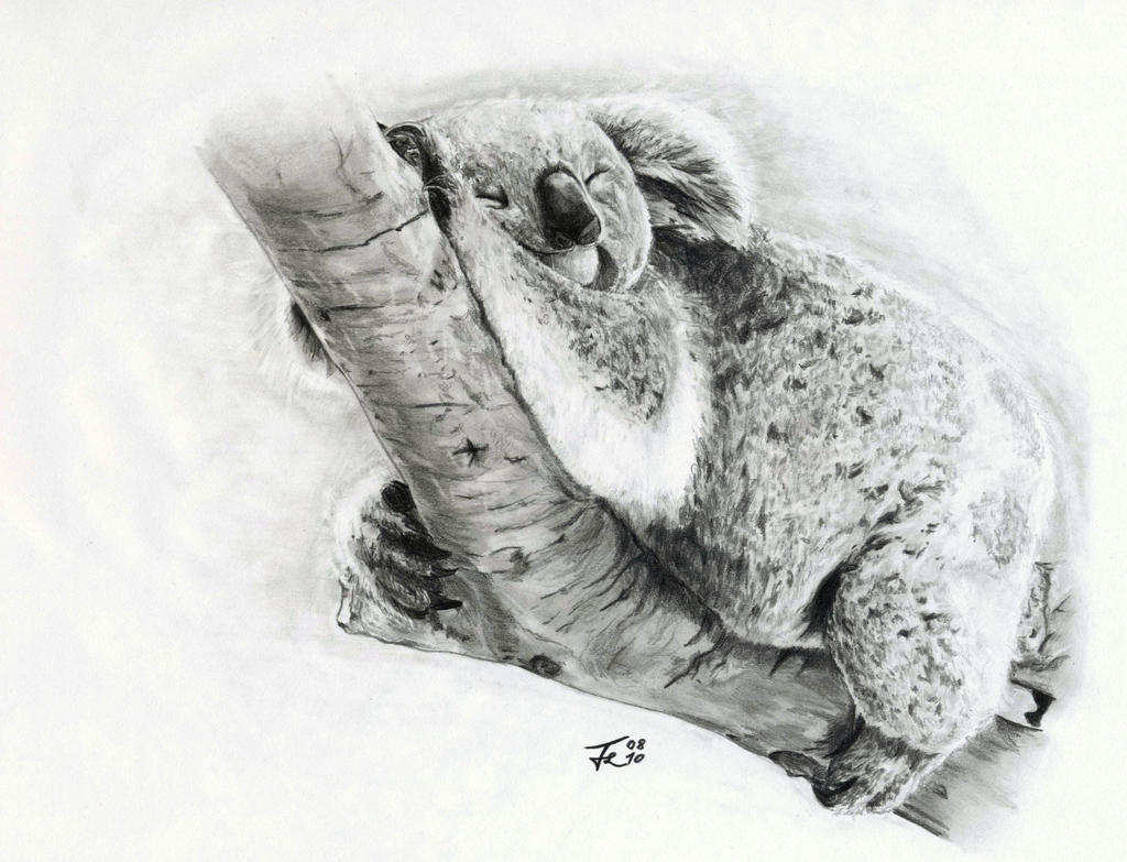how to draw a cute koala