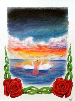 Swans of Love