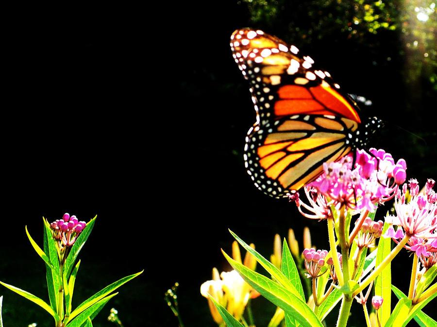 Leptiri A_flying_flower__by_shaynalorelle
