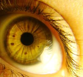 my yellow eyes
