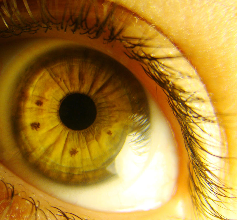 yellow eyes - photo #10