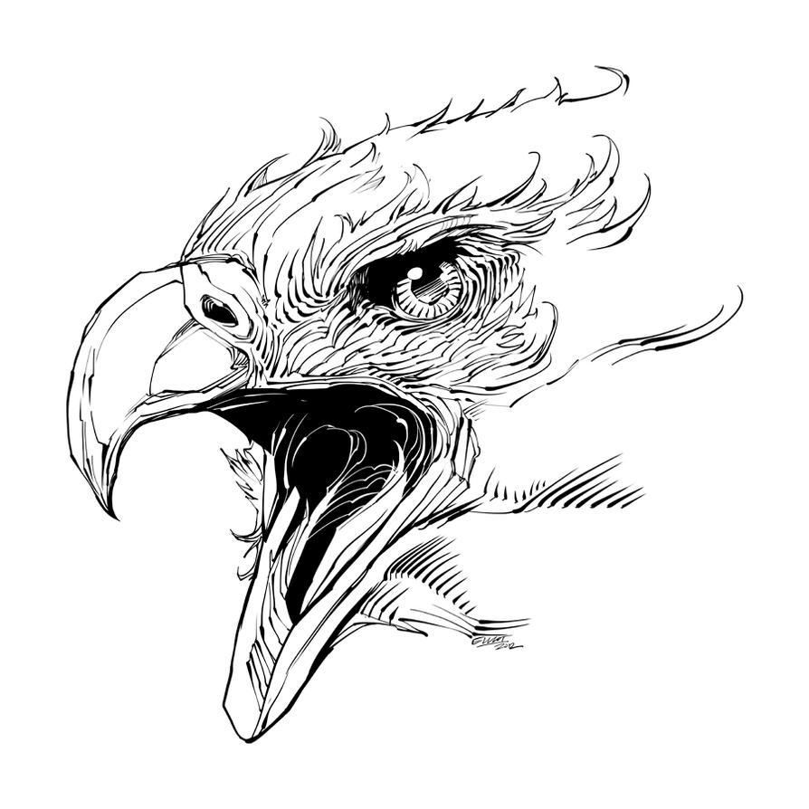 EAGLE HEAD by jerkmonger  Eagle Head Sketch