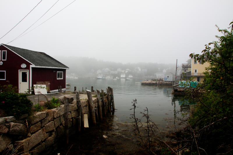 Foggy Morn by phrostie