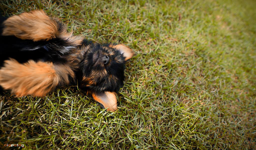 Sleepy head by aiampogi