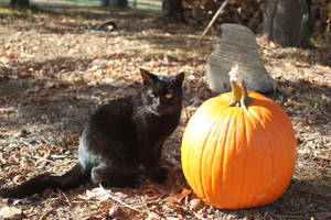Lilly and a pumpkin - 2016 by Crystal-Marine