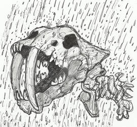 Saber-tooth Cat Skull in the Rain