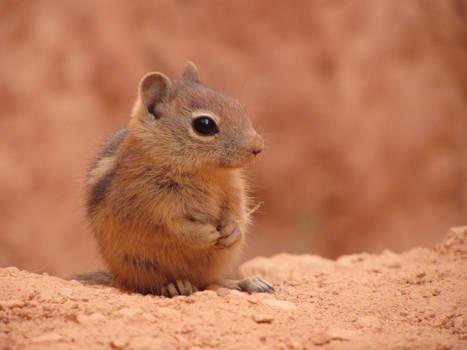 Chipmunk Being Cute