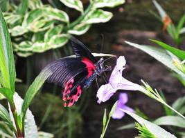 flutter.in.the.garden