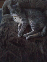 Meow 2 by Silverfur15