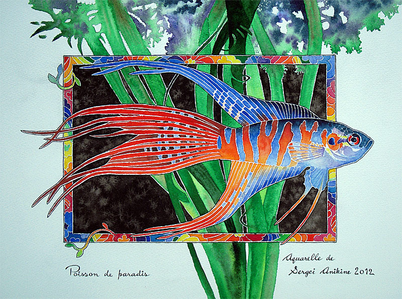 Poisson de paradis by Musyupick