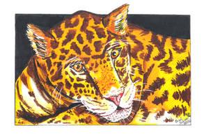 Panthera onca by PeaceMakerSama