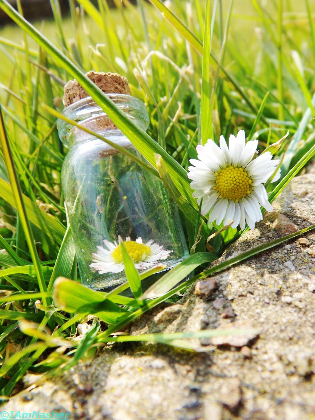 Daisy in a bottle II by IamNasher