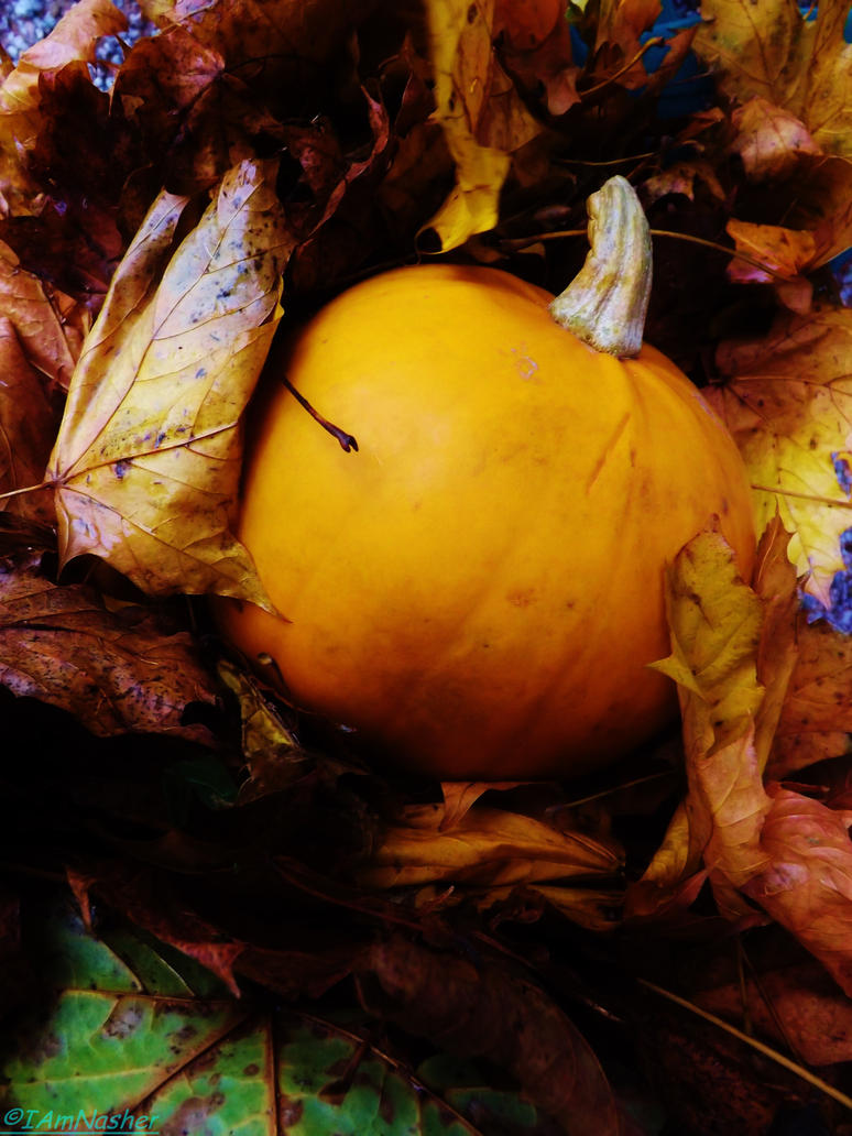 autumn pumpkin by IamNasher