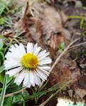 Spring flowers 2015 4 by IamNasher