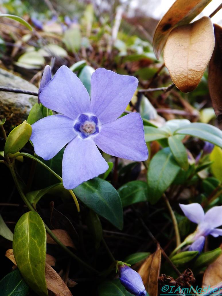 Spring flowers 2015 11 by IamNasher