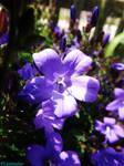 spring flowers 2015 25 by IamNasher