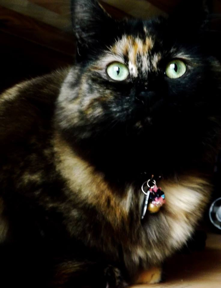 Pretty Kitty cat by IamNasher