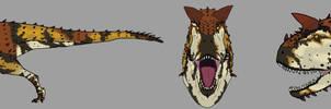 Three faces of Carnotaurus