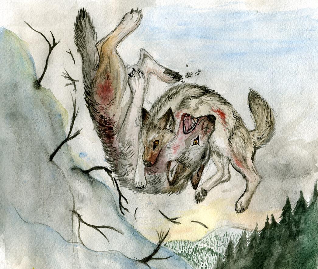 Wolf fight by Amuttaja...