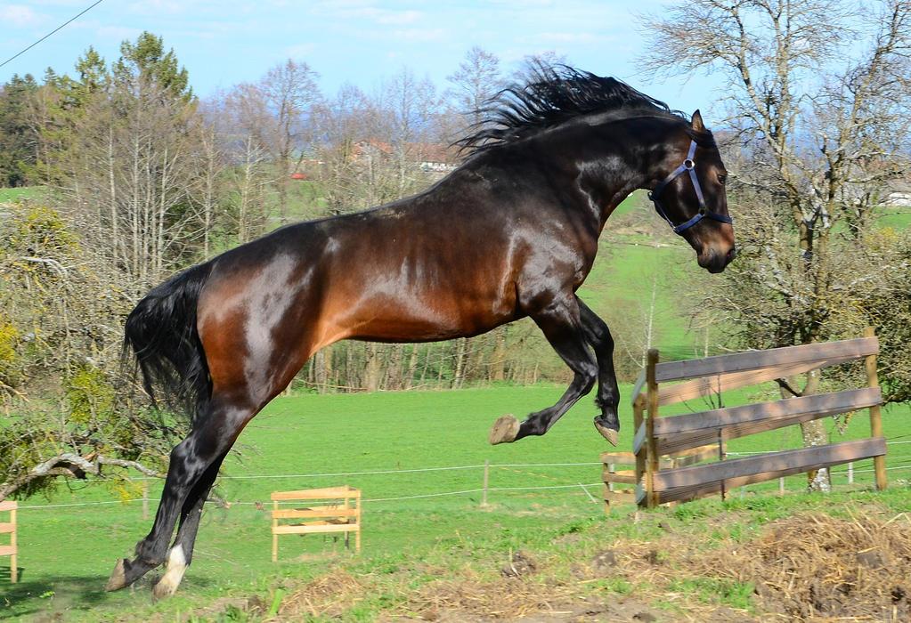 Olderburger Halbblut Horse by DeniseLaMaya